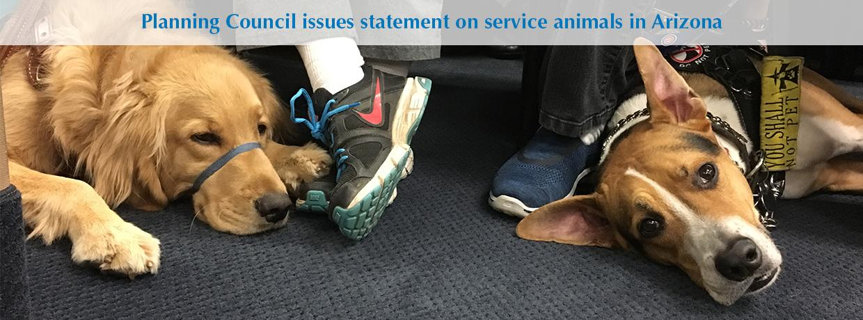 Slideshow-service animal statement